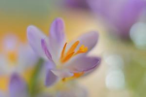 9063_Pastel spring ll by Heidi Westum