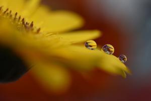 9125_Flower drops by Heidi Westum