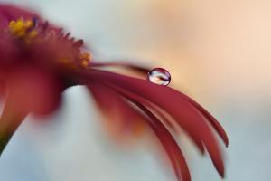 9283_The drop by Heidi Westum