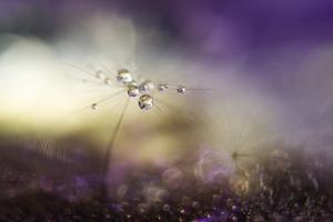A Tender World by Heidi Westum