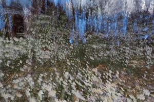 Anemone Forest by Heidi Westum