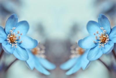 Blue Twins by Heidi Westum