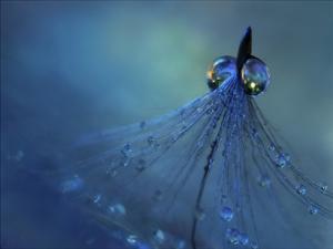 Dancing Into The Blue Night by Heidi Westum