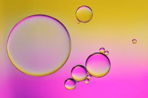 Pink Delight In Yellow by Heidi Westum