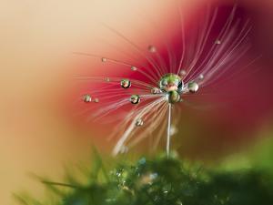 Red Morning by Heidi Westum
