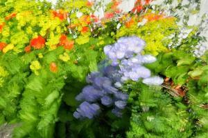 Sea of flowers by Heidi Westum