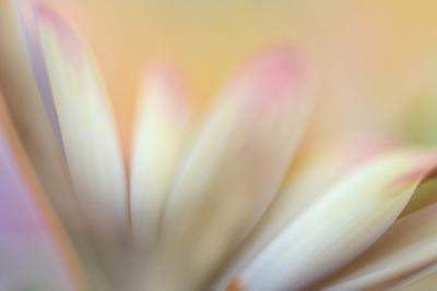 Soft Touch by Heidi Westum