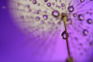 Under the umbrella by Heidi Westum