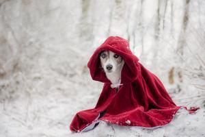 Little Red Riding Hood in Winter by Heike Willers