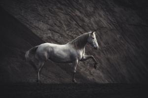 Solitare by Heike Willers