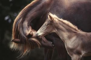 The Bond by Heike Willers