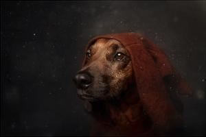 The Night-Watchman by Heike Willers