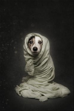 Wrapped by Heike Willers