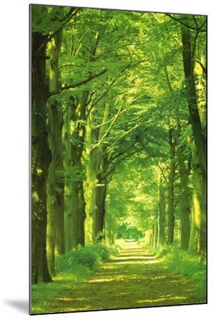 Forest Path by Hein Van Den Heuvel