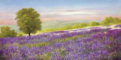 Lavender Field by Heinz Schölnhammer