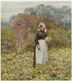 Cutting Cabbages, Allingh by Helen Allingham