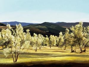 Olive Grove at the Villa by Helen J^ Vaughn