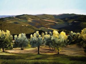 Olive Grove in Italy by Helen J^ Vaughn