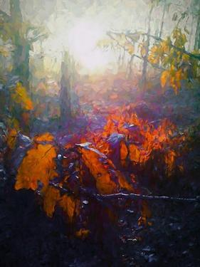 Autumn Forest by Helen White
