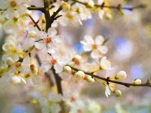 Blossom Joy, 2019, by Helen White