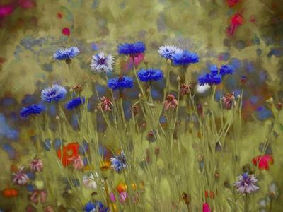 Cornflower Blue painting