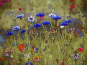 Cornflower Blue painting by Helen White