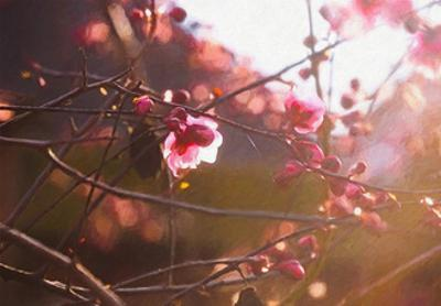First Light of Spring, 2018 by Helen White
