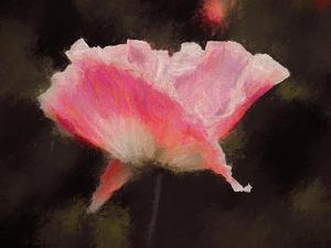 Soft Pink, 2018, by Helen White