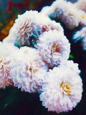 Softly Softly mixed media by Helen White