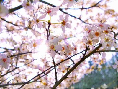 Spring Blossom, 2018 by Helen White