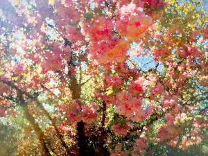 Spring Blossom Sky, 2018 by Helen White