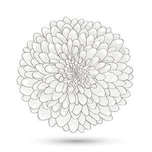Hand-Drawn Flower Chrysanthemum. Element For Design. Abstract Floral Background by Helga Pataki