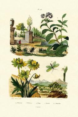 Heliotrope, 1833-39