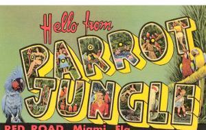 Hello from Parrot Jungle, Miami, Florida
