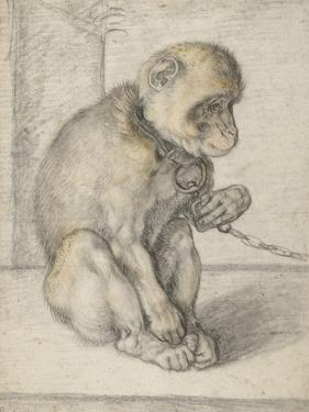 A Seated Monkey on a Chain, 1592-1602 by Hendrik Goltzius