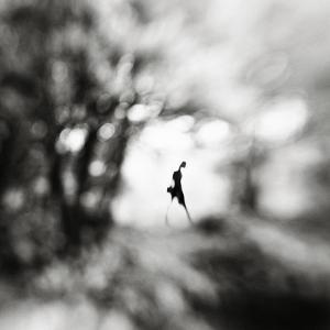 Equinox by Hengki Lee