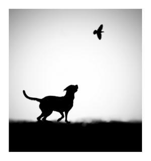 The Clue by Hengki Lee