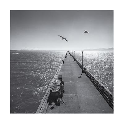 Berkeley Pier Birds by Henri Silberman