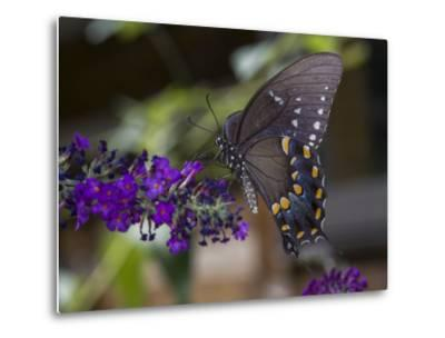 Butterfly on Butterfly Bush (Purple Flower with Insect)