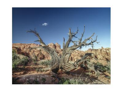 Canyonlands Petrified Tree by Henri Silberman