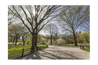 Central Park Walkway Trees and Squirrel (Springtime, Flowering Trees in an Urban Park) by Henri Silberman