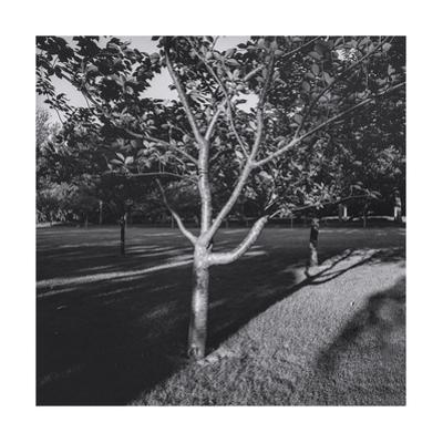 Cherry Tree and Shadows by Henri Silberman