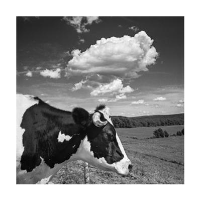 Cow Cloud Kingston, New York by Henri Silberman