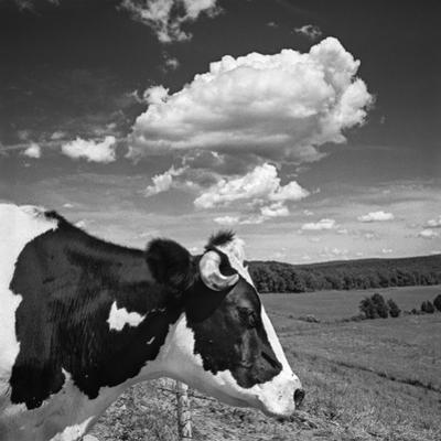 Cow Cloud Kingston, New York by Henri Silberman