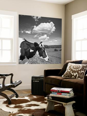 Cow Cloud Kingston, New York