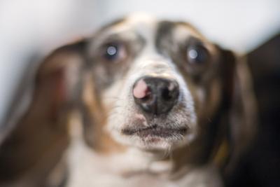 Dog Face Close-Up by Henri Silberman