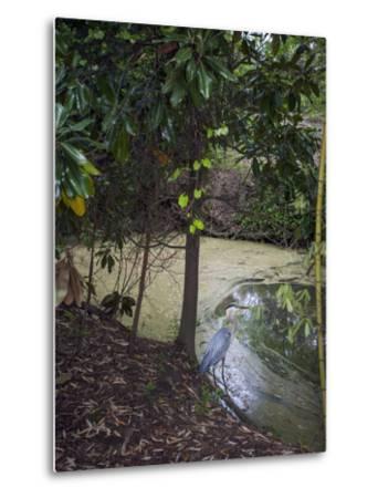 Egret by Pond, Duke Gardens, Durham, NC (Water Bird, Botanical Gardens, South) by Henri Silberman