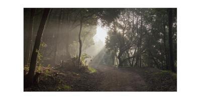 Fire Trail in Fog, Oakland, CA (Leona Heights, Morning) by Henri Silberman