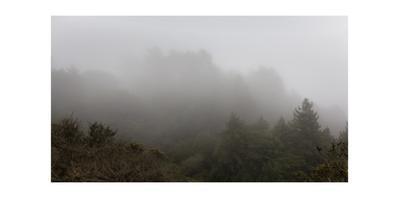 Fog in Redwood Regional Park
