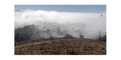 Fog Rolling in on Field, Dunn Trail Redwood Regional Park by Henri Silberman